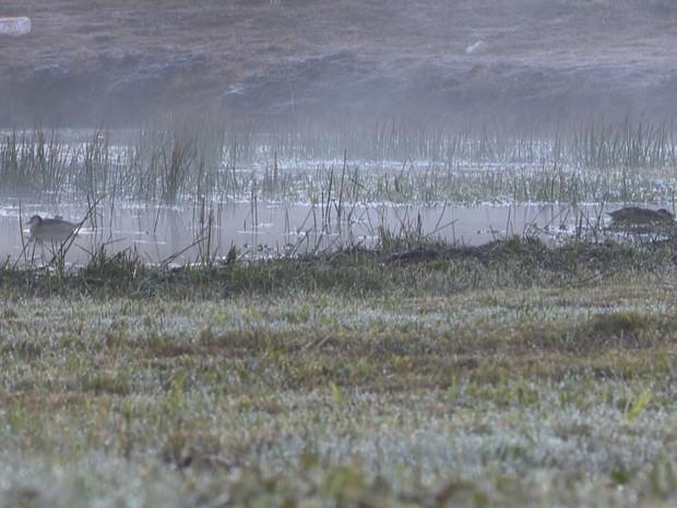 Cruz Alta registrou a temperatura mais baixa do ano na terça-feira (7) (Foto: Reprodução/RBS TV)