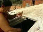 Falta de água provoca morte de animais no semiárido piauiense