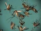 SC teve mais de 4,3 mil casos de dengue em 2016