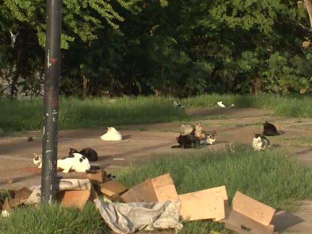 Praça dos Gatos abriga atualmente em São Luís animais domésticos que são abandonados por seus donos (Foto: Reprodução/TV Mirante)