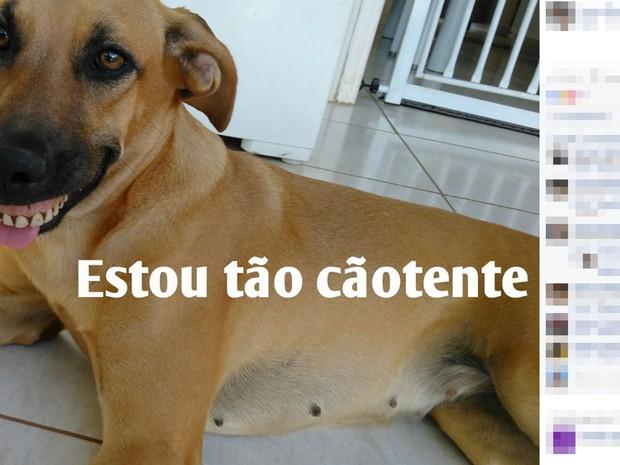 Foto da cadela com dentadura foi parar nos grupos de WhatsApp (Foto: Arquivo Pessoal)
