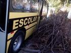 Lixo em terreno perto de escola em Rio Claro, SP, gera reclamação; veja