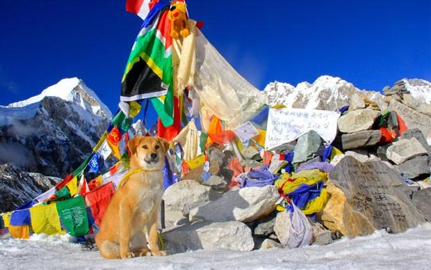 'Rupia' teria se tornado o primeiro cachorro a chegar ao acampamento base do Monte Everest (Foto: Joanne Lefson/AFP)