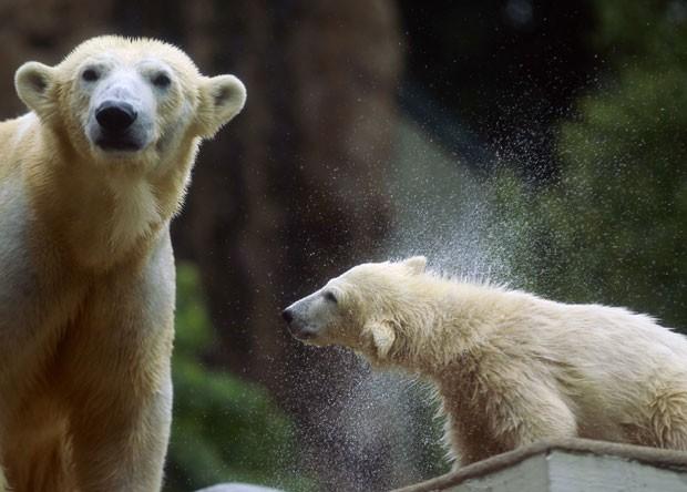 A ursinha nasceu em janeiro deste ano. Elá é irmã de Knut, urso polar que ficou famoso na Alemanha e no exterior em 2006 ao ser rejeitado pela mãe e tratado por humanos, mas morreu no ano passado. (Foto: Ina Fassbender/Reuters)