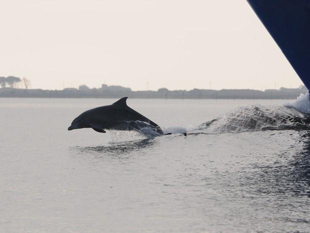 Golfinhos são protegidos através do Projeto Botos da Lagoa da Universidade Federal de Rio Grande (Foto: Projeto Botos da Lagoa dos Patos)