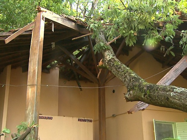 Árvore desabou e destruiu telhado de banheiro da Cava do Bosque (Foto: Antônio Luiz/EPTV)