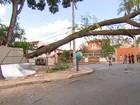 Queda de árvore deixa moradores sem energia na Serra, em BH