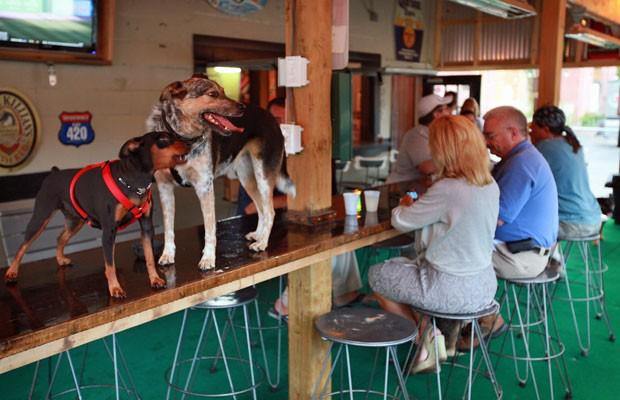 Clientes e cachorros passeiam no 'Dog Bar', o primeiro bar que permite a entrada de cachorros de Charlotte, na Carolina do Norte. Os cães devem estar vacinados contra raiva e castrados (Foto: AFP)