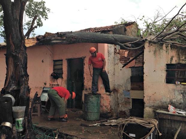 Árvore atingiu casa após ventania em Ladário (Foto: Michelle Machado / TV Morena)