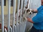 Bombeiros fazem resgate de cão preso em grade de portão em Tupã