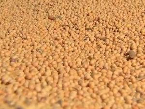 Cota��es da soja caem at� 14 pontos na bolsa de Chicago