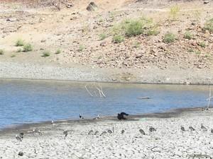 Açude em Triunfo, na Paraíba, também foi atingido pela seca e os animais estão quase sem água para beber  (Foto: Taiguara Rangel/G1)