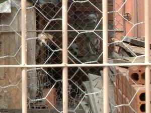 Mulher vivia com cães e gatos em casa em Santa Maria (RS) (Foto: Reprodução/RBS TV)