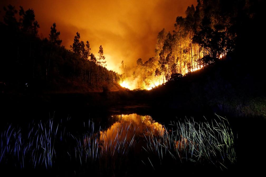Floresta perto de Bouca, na região central de Portugal, neste domingo (18)  (Foto: Rafael Marchante/ Reuters)