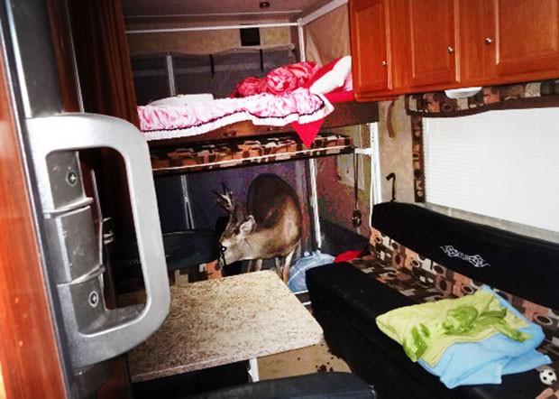 Apesar do susto, animal não sofreu ferimentos (Foto: Garfield County Sheriff/AP)
