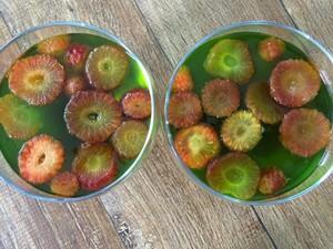 Gelatina com frutas é outra opção mostrada no Mistura  (Foto: Isadora Mafra/RBS TV)