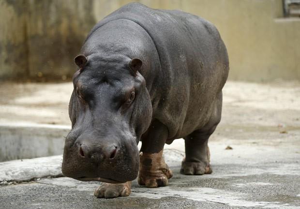 Americano pensou que havia sido atacado por hipopótamo (Foto: Reuters)