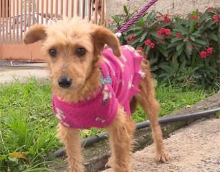 A história da cachorrinha Mona comoveu milhares de pessoas (Foto: Reprodução/RPC)