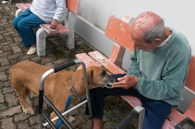 Planeta_Bicho_cachorros_idosos (Foto: Arquivo pessoal)