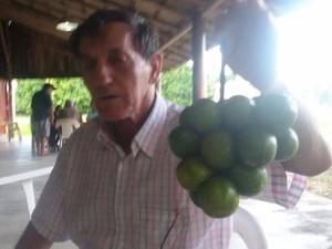 Pé de limão deu cachos com 17 frutas (Foto: Arquivo pessoal)