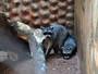 Zoológico expõe quatro animais da espécie