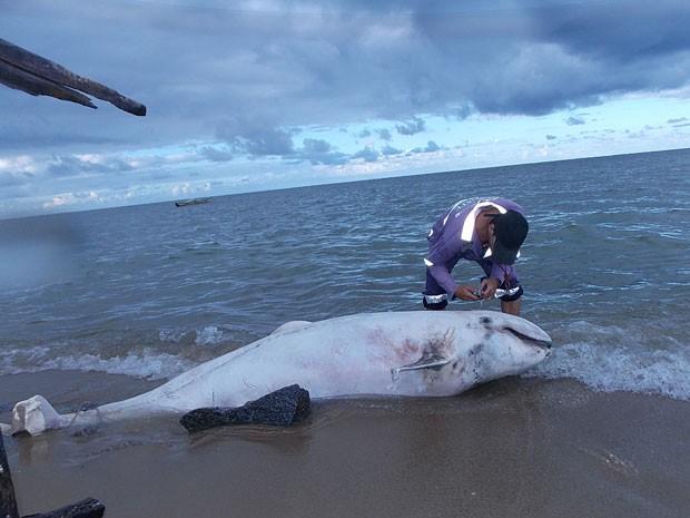 Baleia encontrada na Praia de Pau Amarelo, em Paulista, PE (Foto: Adriano Artoni / Acervo Pessoal)