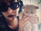 Fofo! Lady Gaga posta foto com gatinho de estimação