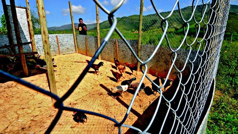 aves_galinha_galinheiro (Foto: Adriano Gambarini)