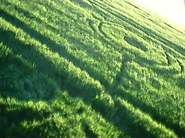 Marca foi encontrada em meio a lavoura de trigo, na cidade de Chopinzinho (Foto: Edson/ Arquivo Pessoal)