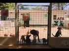 APA arrecada doações para instalar  clínica veterinária em Uberlândia