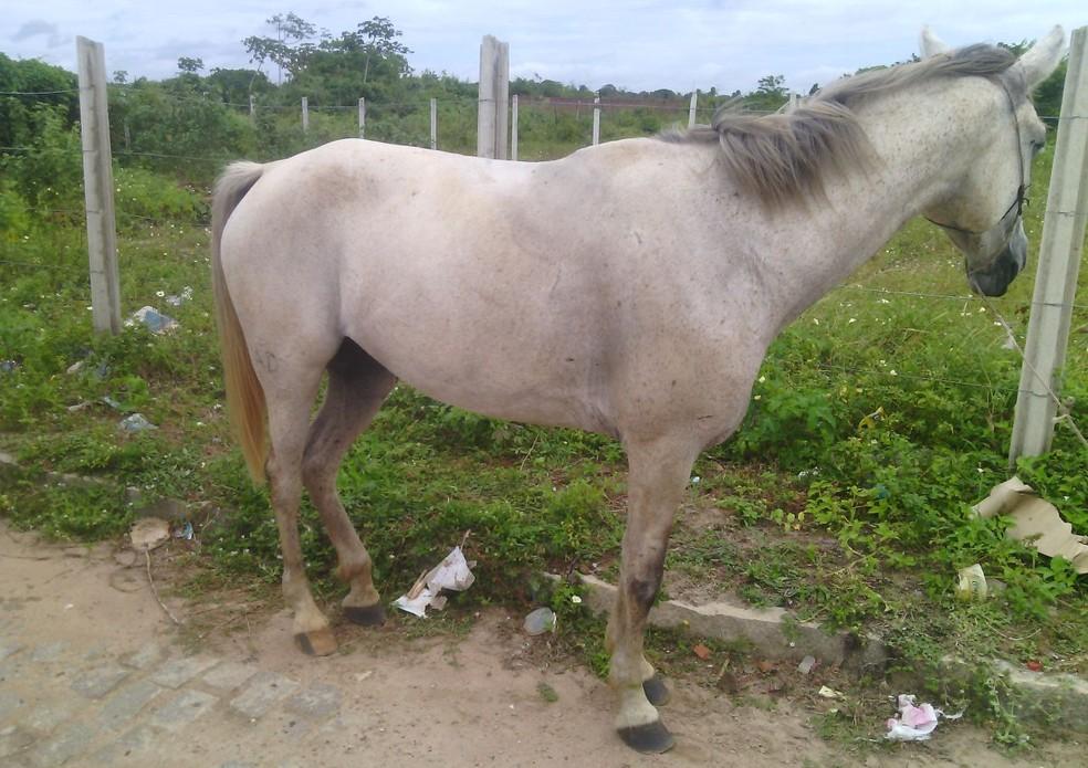 Vítima foi atingida por três tiros ainda em cima do cavalo, em São Gonçalo do Amarante, RN (Foto: Julianne Barreto/ Inter TV Cabugi)