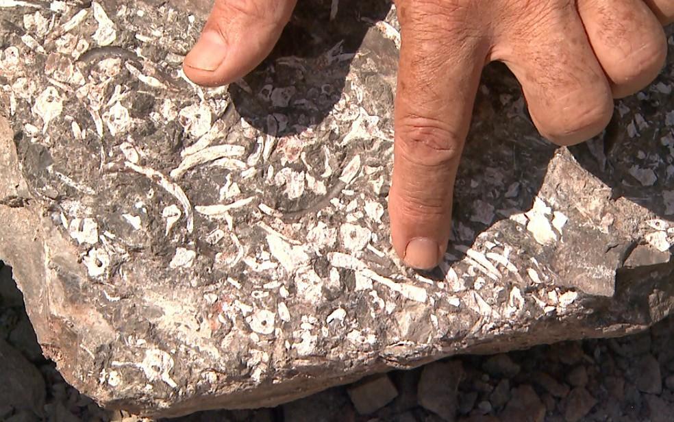 Estudo aponta fragmentos de Mesosaurus brasiliensis em rochas em Santa Rosa de Viterbo, SP (Foto: Maurício Glauco/EPTV)