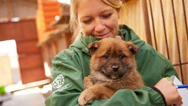 Os cães libertados nesta semana serão levados par aos EUA e adotados na Califórnia  (Foto: Change For Animals Foundation)