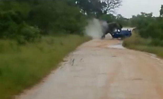Elefante atacou carro de turistas no Parque Nacional Kruger (Foto: Reprodução/YouTube/WORLD WILD)