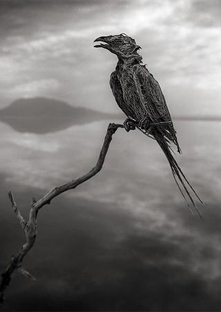 Aves não sobrevivem à composição química fatal do lago (Foto: Nick Brandt)