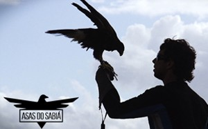 asas do sabiá
