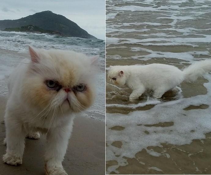 Gatinhos no banho (Foto: Gshow)