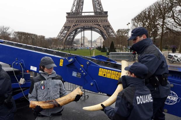 Agentes da alfândega seguram presas de marfim antes da destruição do material (Fot Reuters/Charles Platiau)