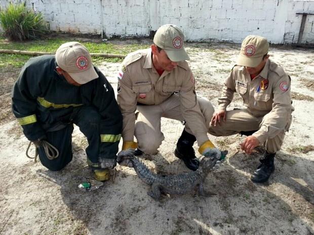 Animal foi encotrado por funcionários de empresa (Foto: Divulgação/Corpo de Bombeiros)