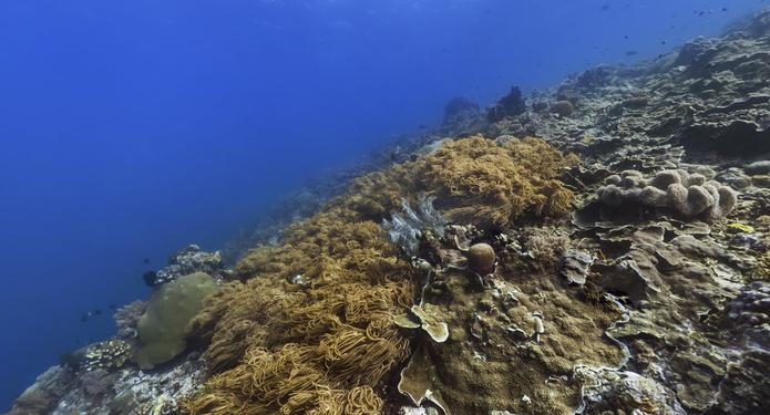 Grande Barreira de Corais no Street View do Google Maps (Foto: Reprodução/Paulo Finotti)