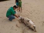 Golfinho fêmea é encontrado morto na praia de Garça Torta, em Maceió
