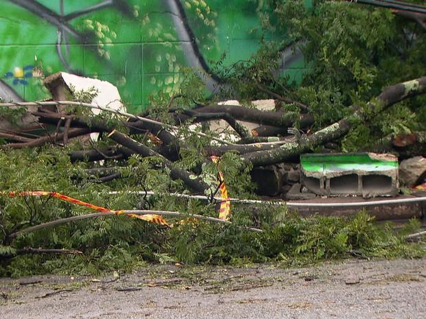 Temporal derrubou muro e árvores na Escola Estadual Sebastião Walter Fusco, em Guarulhos (Foto: Reprodução TV Globo)