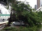 Chuva e ventos fortes derrubam árvores na Grande João Pessoa