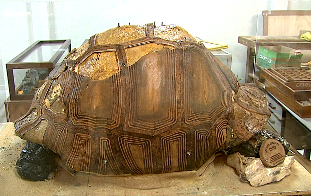 Fósseis de tartaruga e preguiças gigantes foram achados no Acre (Foto: Bom Dia Amazônia )