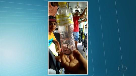 Passageiros encontram filhotes de cobra em ônibus no Grande Recife