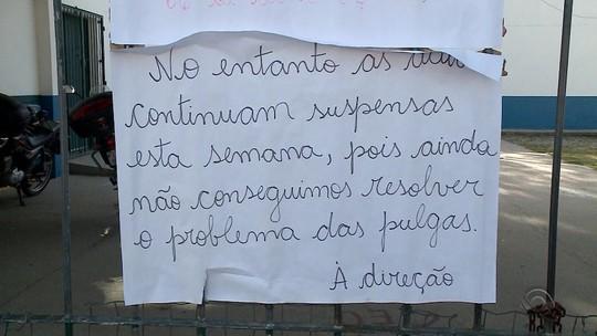 Infestação de pulgas deixa alunos sem aulas durante um mês em Rio Grande