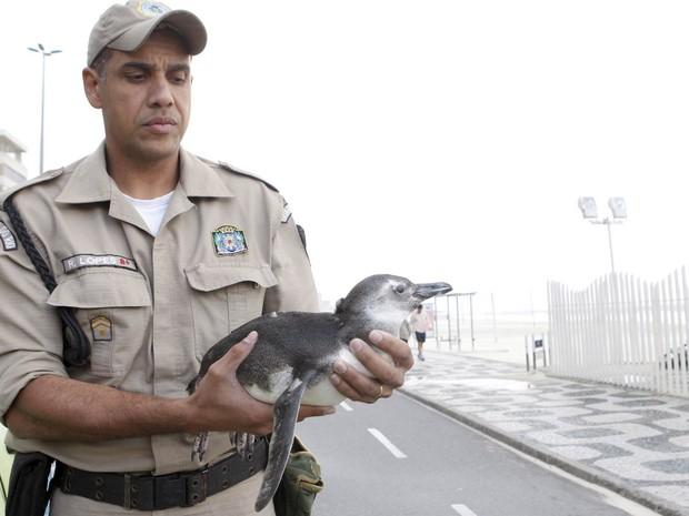 Pinguim é encontrado na praia do Leblon, na Zona Sul do Rio de Janeiro. (Foto: Gustavo Stephan/Agência O Globo)