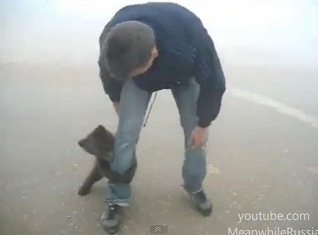 Vídeo mostra ursinho 'tacando' homem. (Foto: Reprodução)