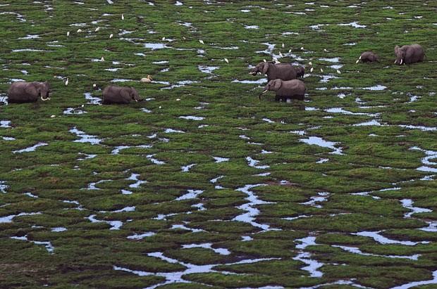 Foto aérea mostra elefantes caminhand em Parque Nacional Amboseli. (Foto: AFP Photo/Tony Karumba)