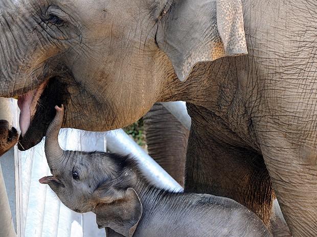 Elefante 2 (Foto: Fred Tanneau/AFP)
